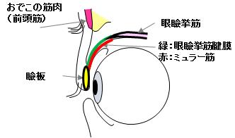 目を開ける仕組み1
