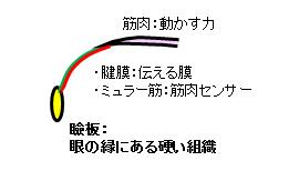 目を開ける仕組み3